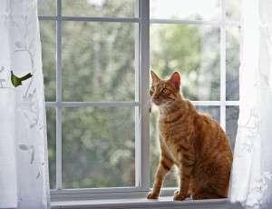 20121227-catster-vet-tips-3