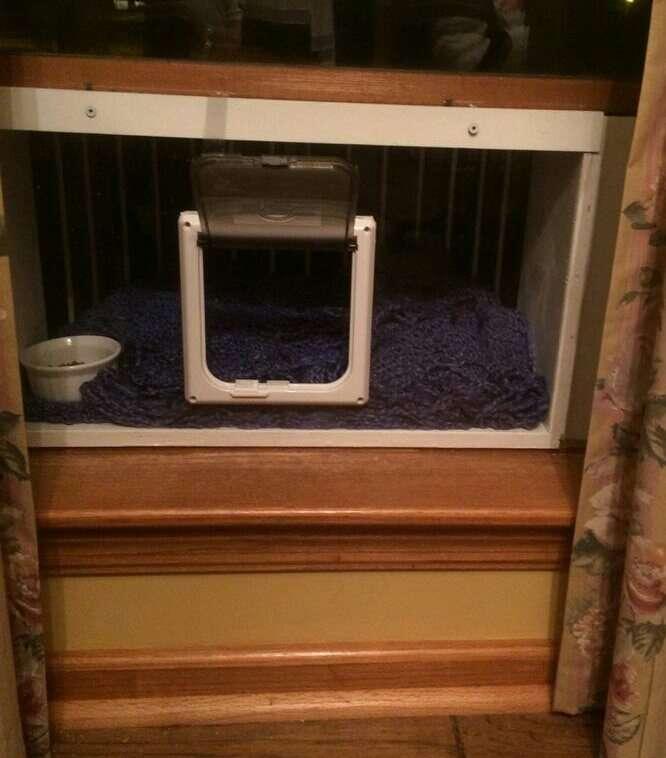 Outdoor cat window box