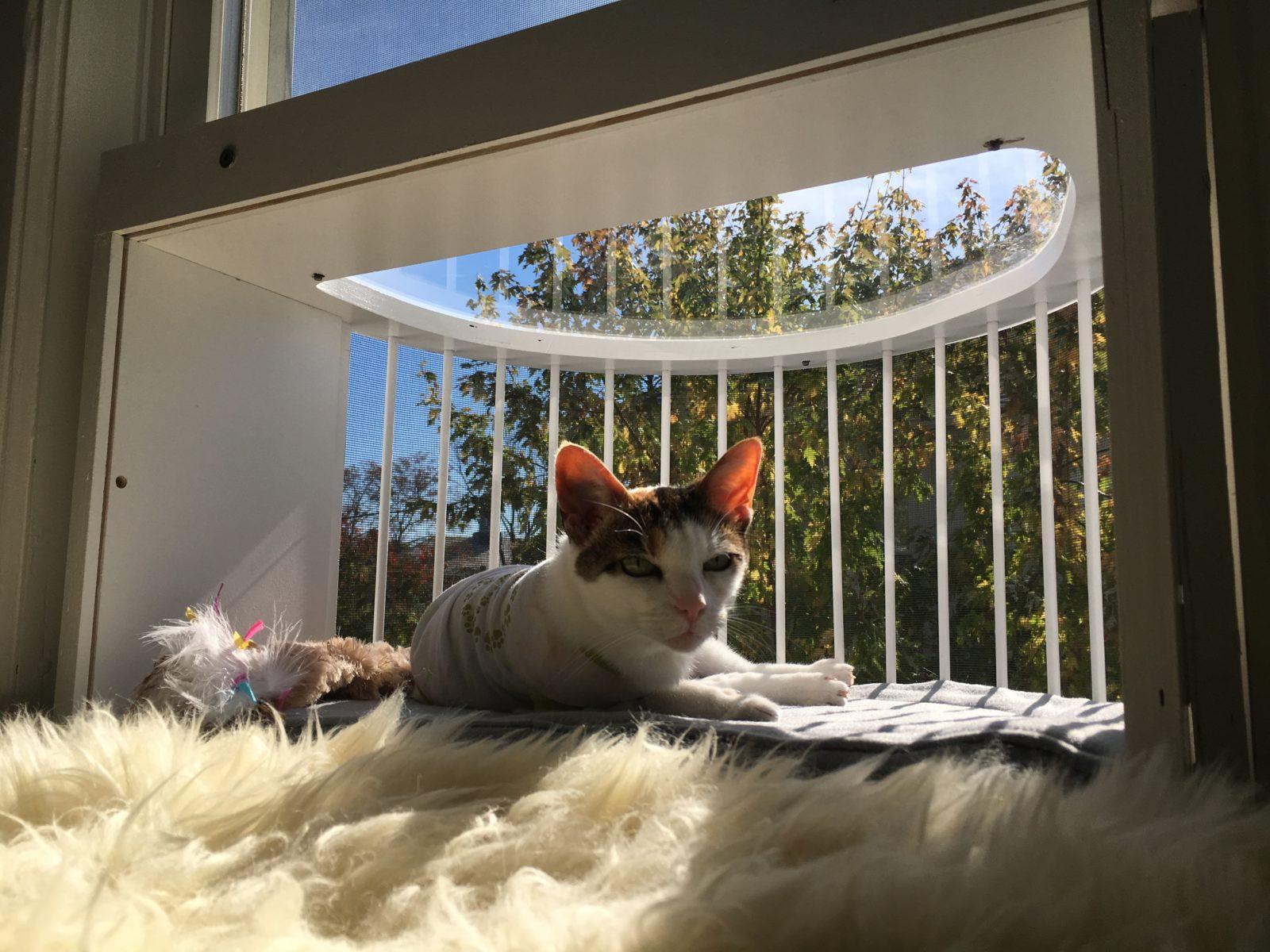 Cat Solarium
