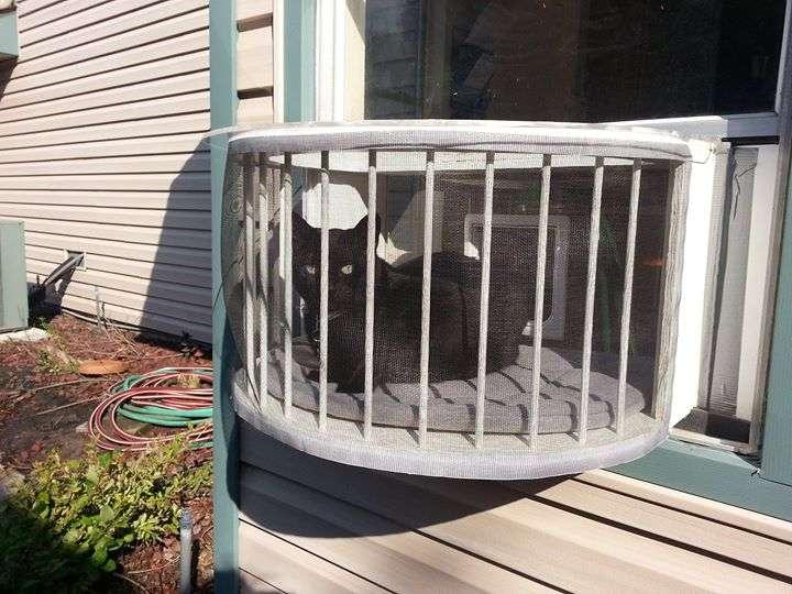 Catsolariumhouston3